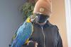 canton-bird WS.png