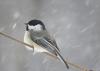 canton-bird.png