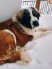 colton-big-dog.png