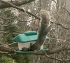 crary-mills-squirrel-feeder.png