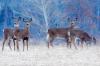deer-in-Madrid.png