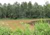 dirty-water-Oswegatchie.png