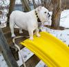 dog-on-slide.png