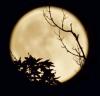 fall-moon-Madrid.png
