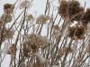 frozen-foliage-richville.png
