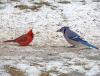 gouverneur-red-vs-blue.png
