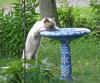 lisbon-thirsty-kitty.png