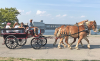massena-horses.png