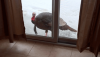 massena-snow-turkey 2.png