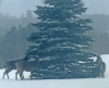 norwood-deerts.png