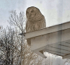 owl-in-pierrepont.png