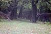 pierrepont-deer-fight.png