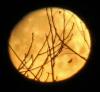 richville-moon.png