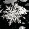 snow-flake-Potsdam.png