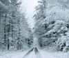 snow-road-Brasher-Falls.png