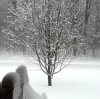 snowy-tree-colton.png