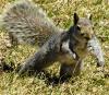 squirrel-Richville.png