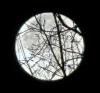 super-moon-dafoe.png