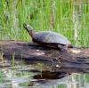 turtle-lisbon.png