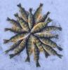 waddington-perch-mandala.png