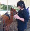 wildlife festival alpaca 2.png