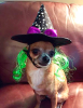 witchy-pup.png